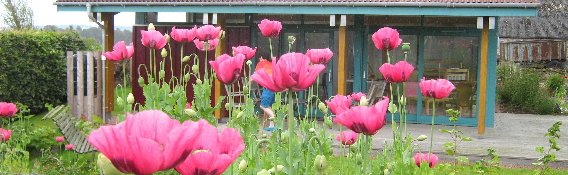 View of the Colourbothy weaving studio from the veg patch
